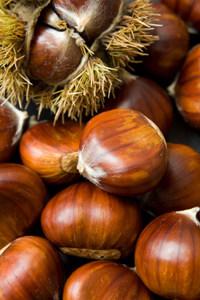 american_chestnut_tree image2