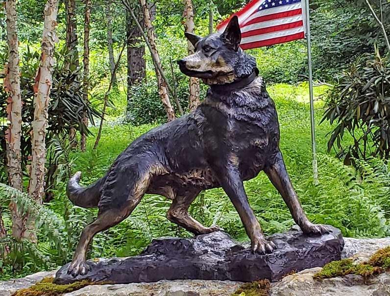 war-dog